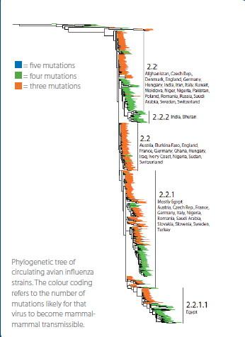 H5N1 phylogenetic tree